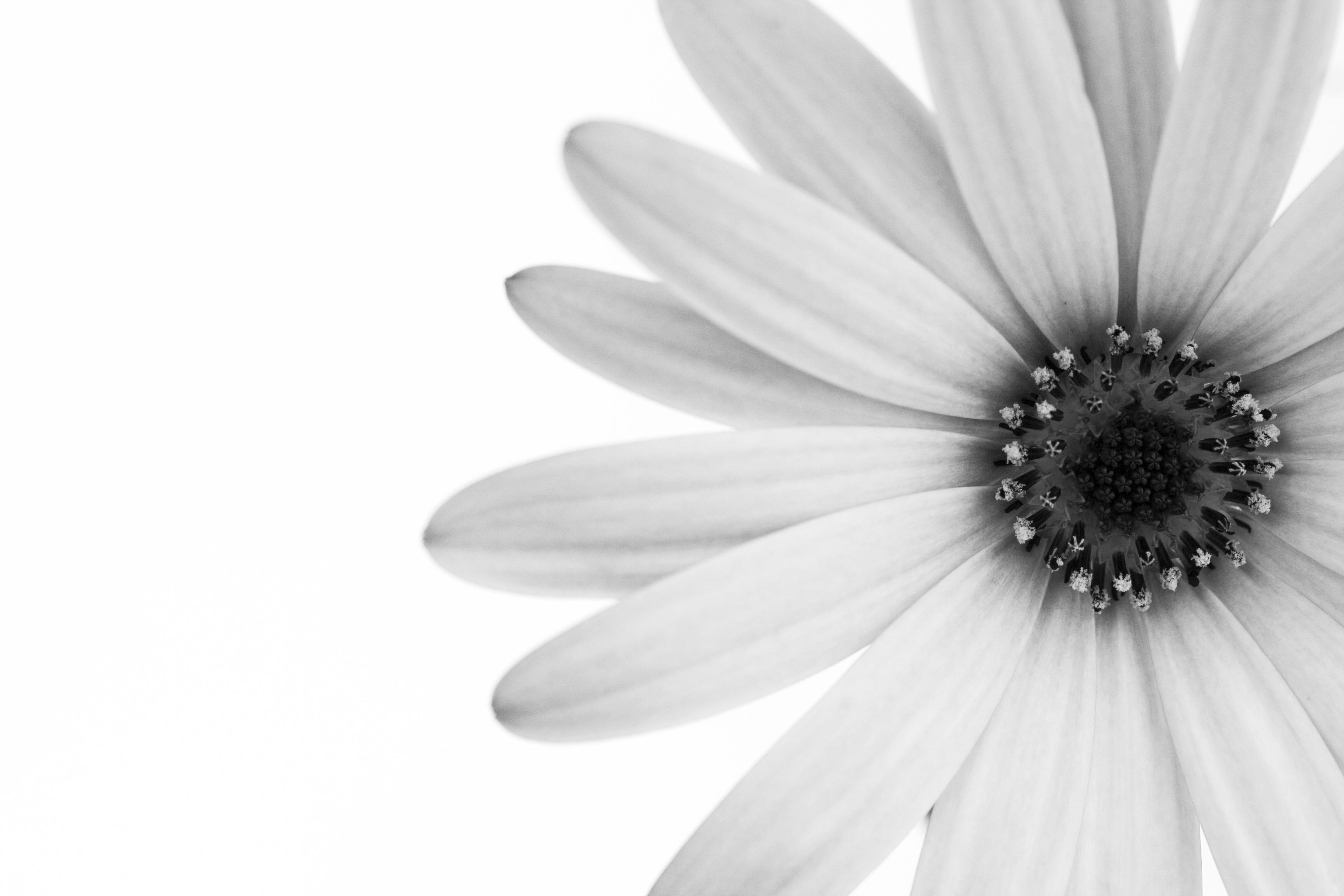 A Black & White Flower Print