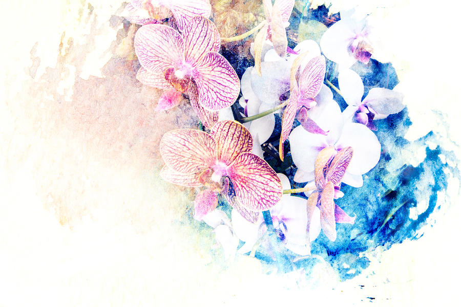 The Orchids Painting