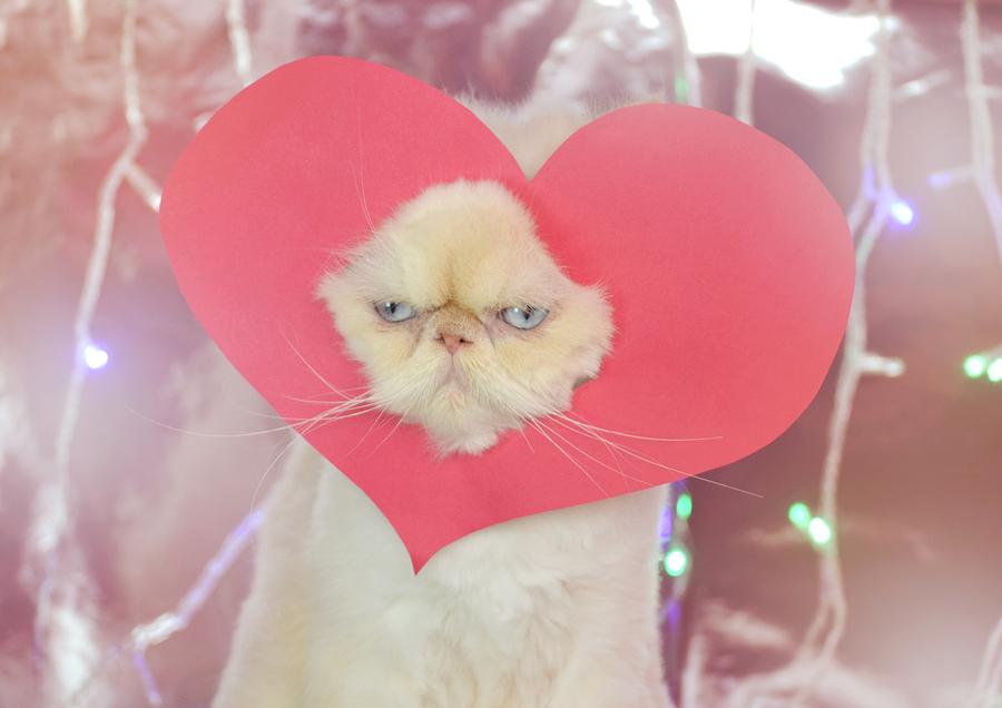 A Grumpy Cat Poster