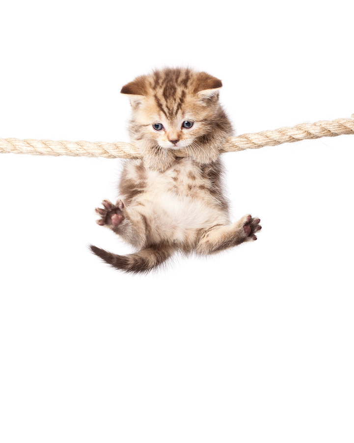 A Hang In There Kitten Poster