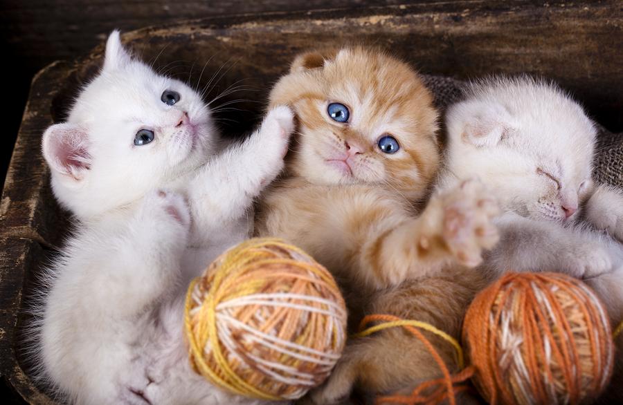 A Kittens Poster