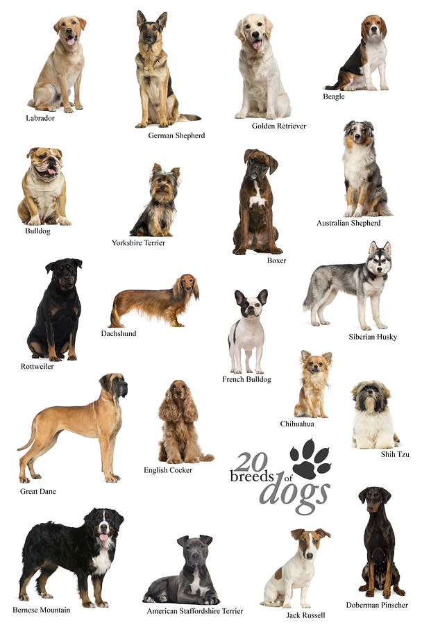 A Dog Breed Poster