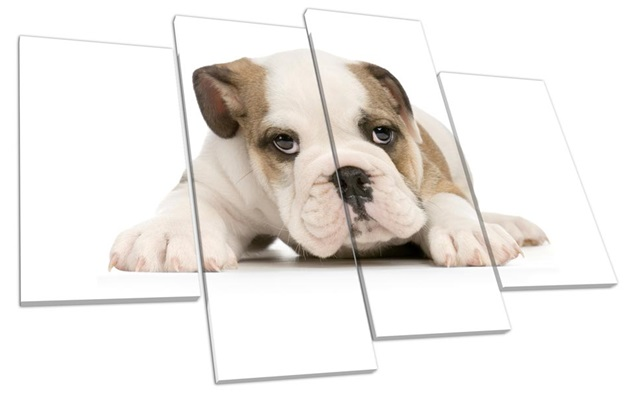 A Split Canvas of a Dog