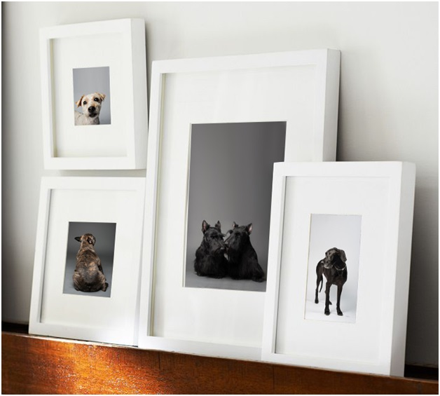 The Photos of Dogs