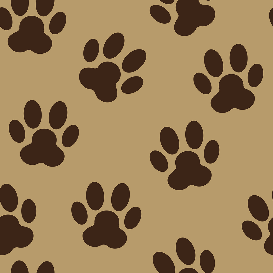 A Dog's Paws Poster