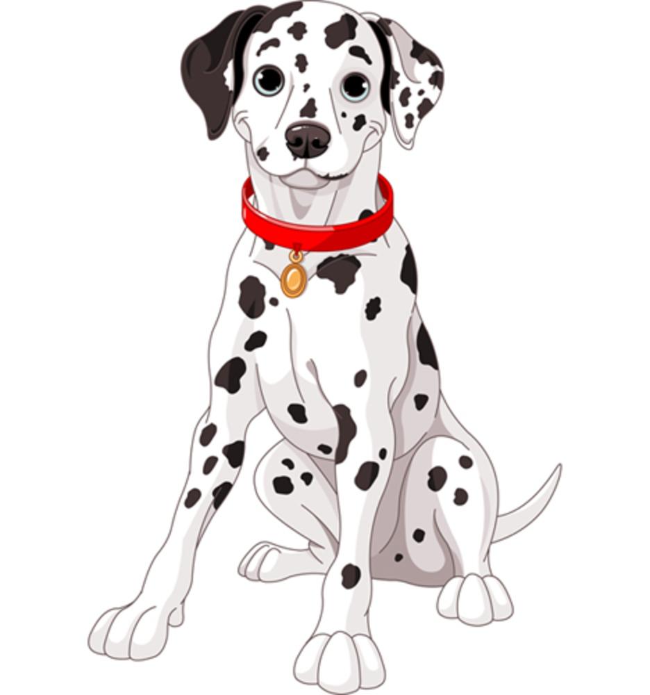A Dalmatian Illustration