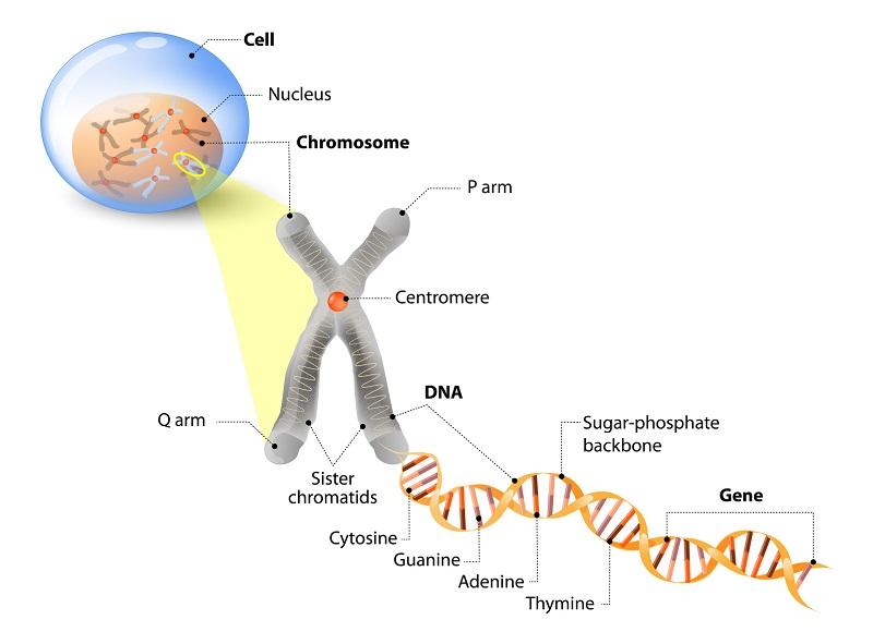 A Biology Poster