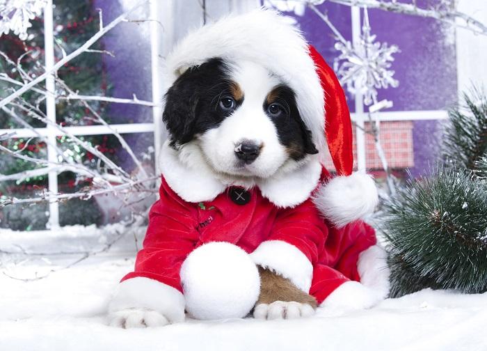 A Dog Christmas Poster