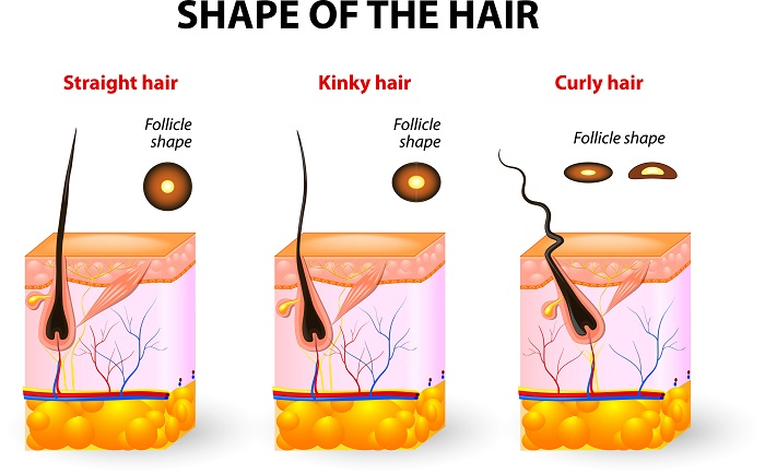 A Hair Informational Poster