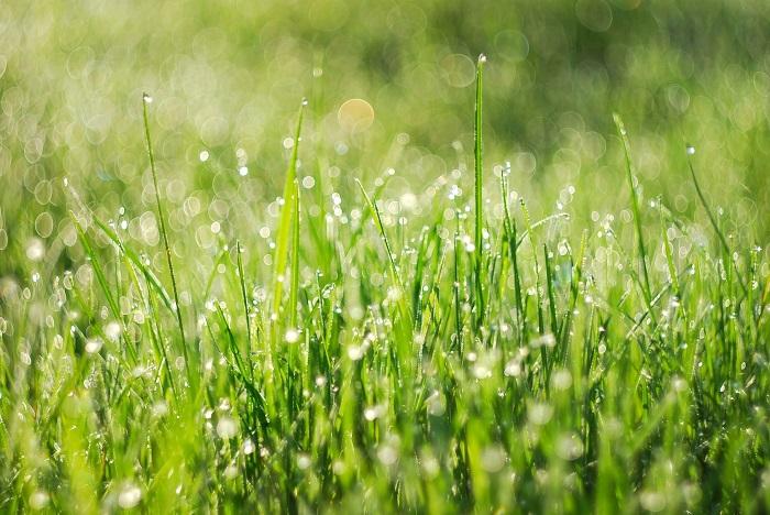 A Green Grass Poster