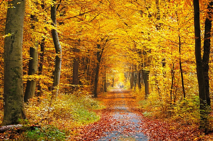 An Autumn Forest Poster