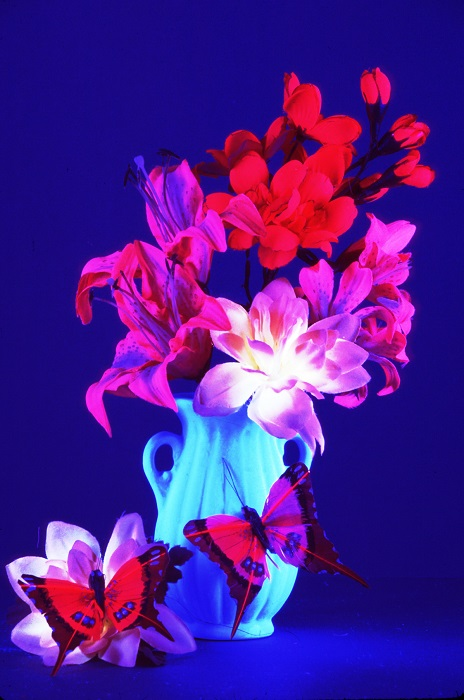 A Blacklight Flowers Poster