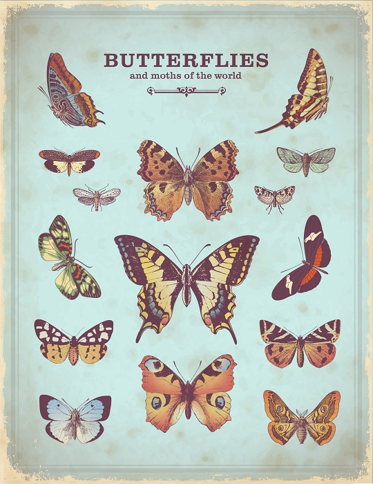 A Vintage Science Poster of Butterflies Species