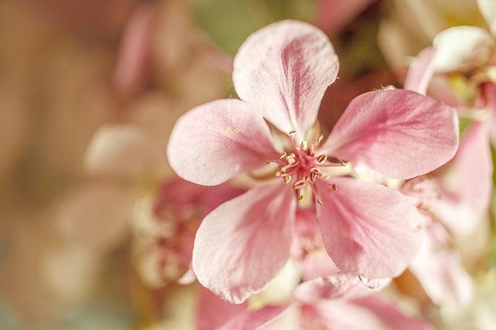 Flower Poster for Bedroom