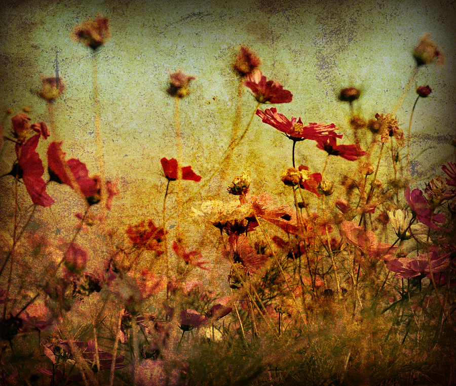 Vintage Flowers Print